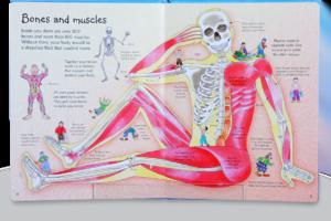 see-inside-body-4