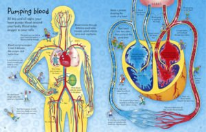 see-inside-your-body-2-3
