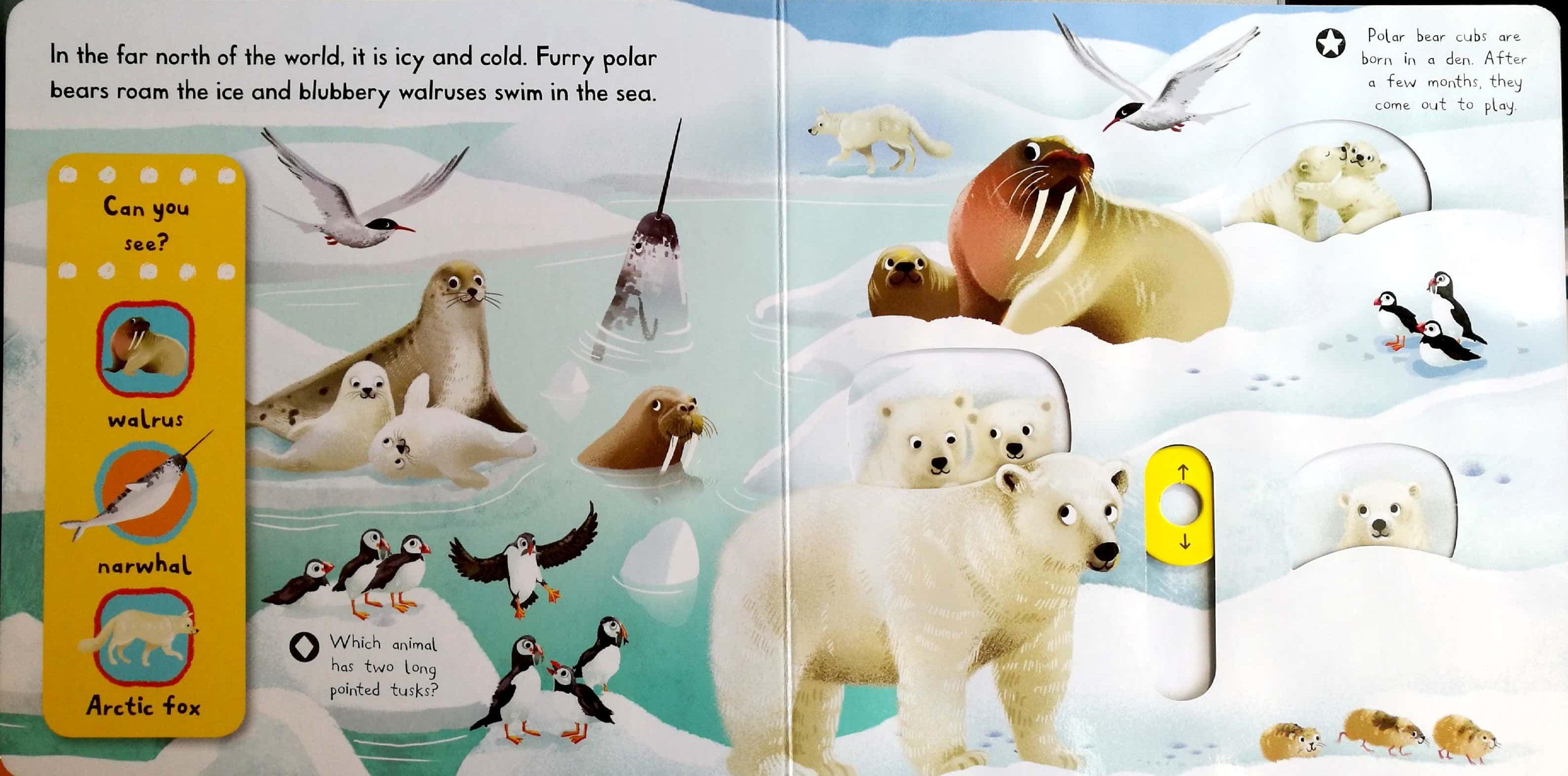 first-explorers-snowy-animals-1
