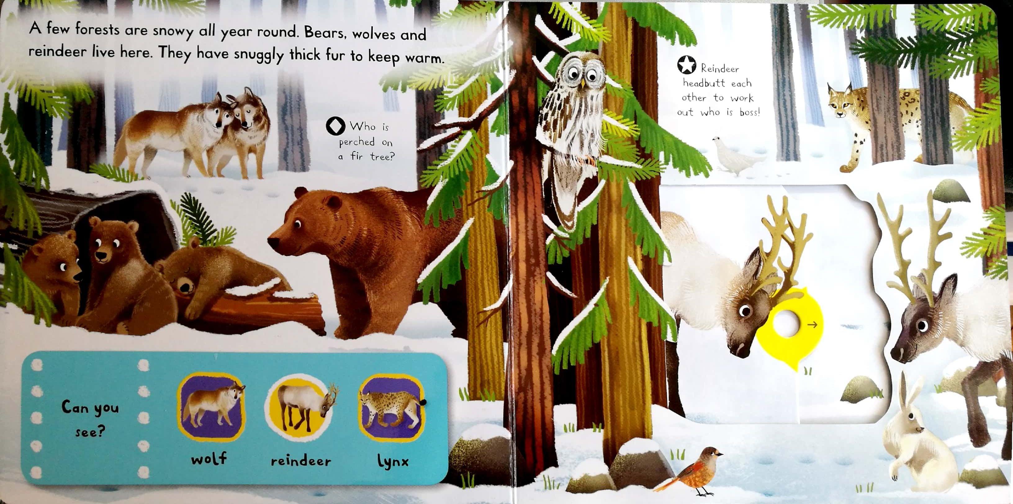 irst-explorers-snowy-animals-2