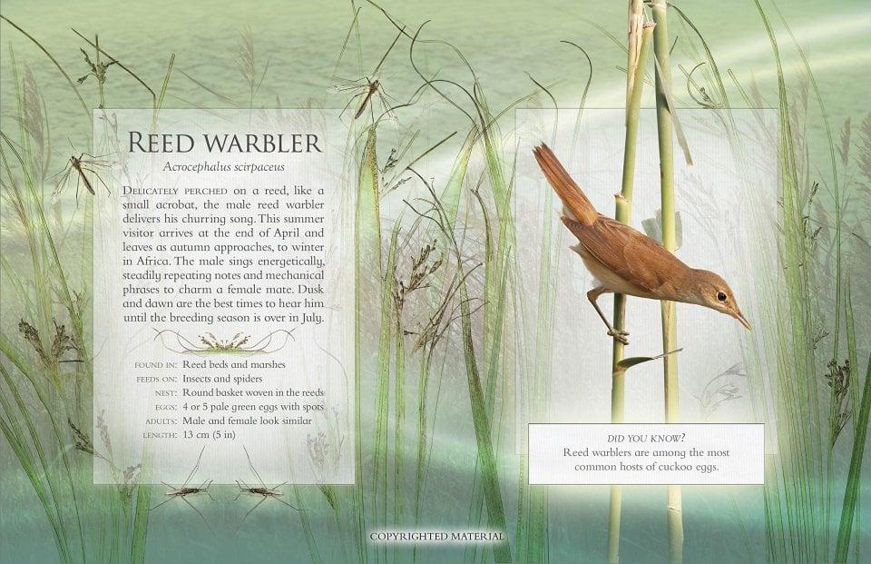 the-little-book-of-wetland-bird-sounds-1
