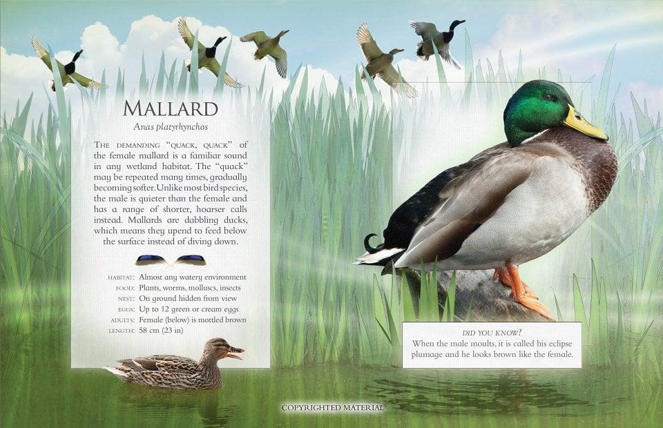 the-little-book-of-wetland-bird-sounds-3