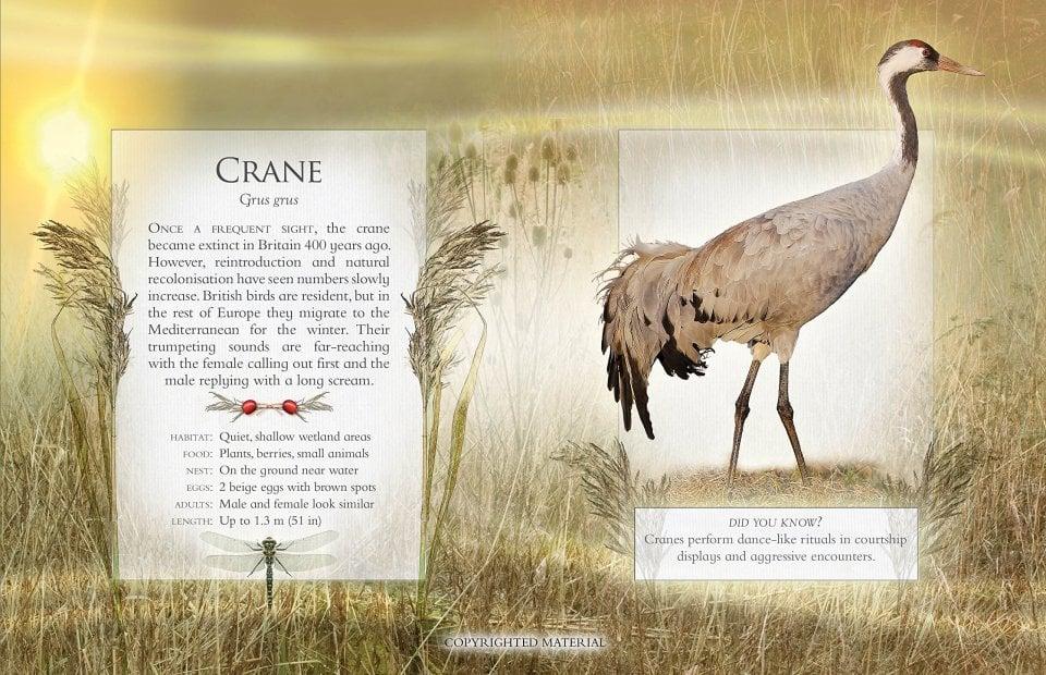 the-little-book-of-wetland-bird-sounds-4