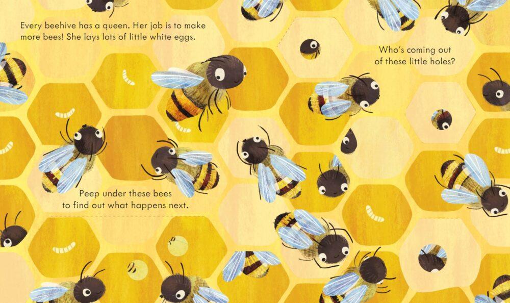 peep-inside-a-beehive-1